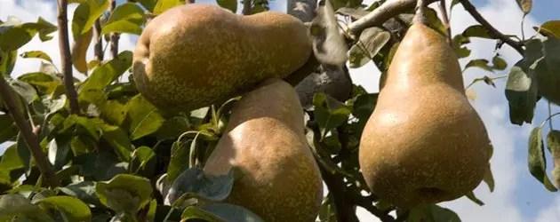 Agricoltura: emergenze dell'estate 2012