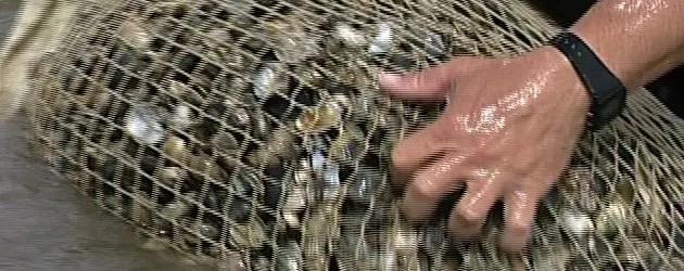 Turisti 'pescatori' di vongole
