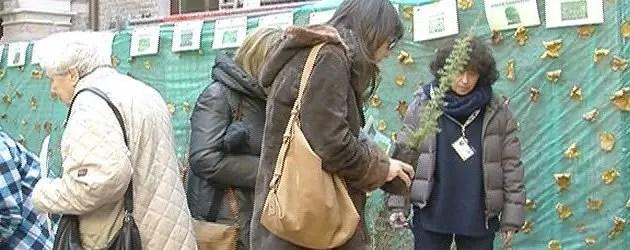 Alberi in adozione contro l'inquinamento in città