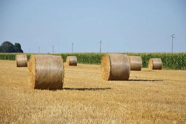 Cia Ferrara: i cereali rimangono una coltura di riferimento, nonostante i prezzi