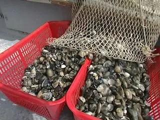 'Falso sulle vongole', Consorzio pescatori di Goro sotto accusa