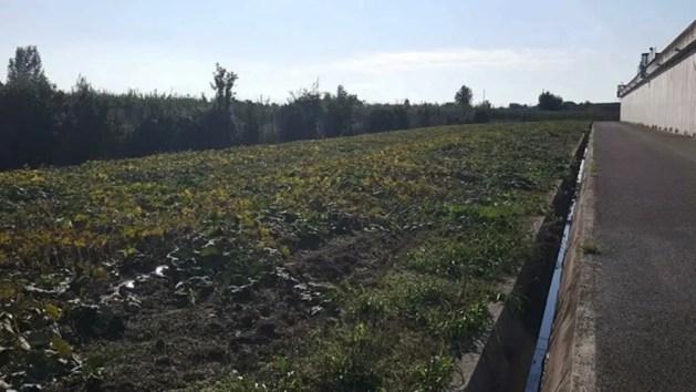 Detenuti coltivano l'orto vicino al carcere di Ferrara: il progetto – INTERVISTA