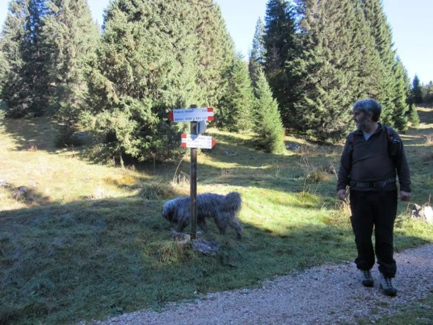 Copparese muore nel bosco: il cane veglia su di lui per ore