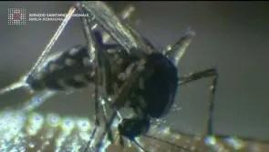 West Nile, nuovo caso a Ferrara. S'intesifica la lotta alla zanzara – VIDEO