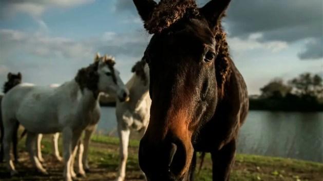 """Insieme per i cavalli di Ostellato: il Galà di """"Horse Angels"""" – VIDEO"""