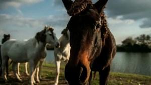 ostellato cavalli