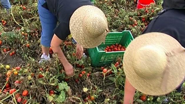 Lavoratori stagionali, sindacati chiedono aiuto alla Regione