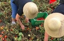 Agricoltura: sindacati tengono attenzione alta nelle campagne contro caporalato – VIDEO