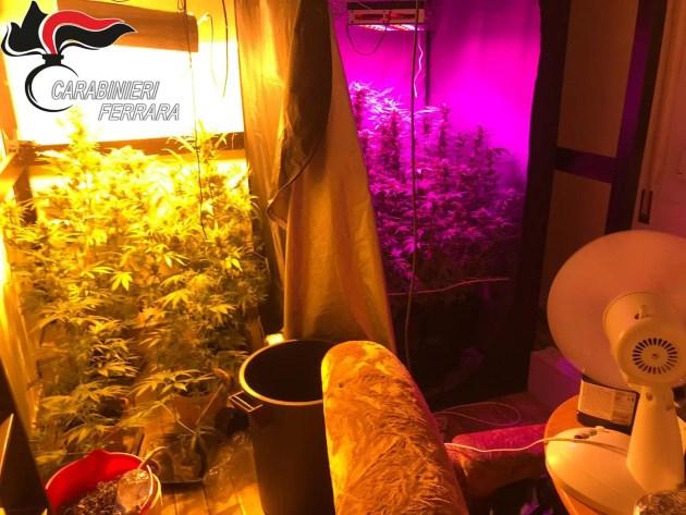 Coltivava droga in casa: giovane arrestato a lido Volano