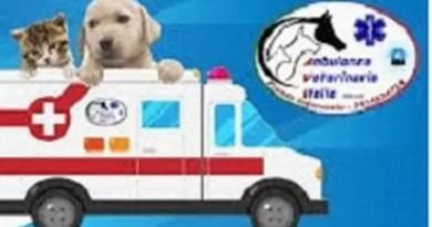 ambulanza animali