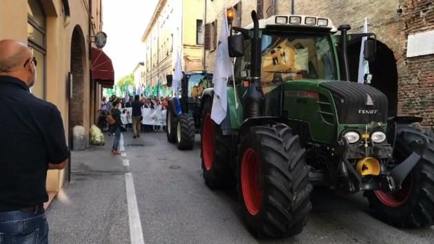 Cimice asiatica, mobilitazione a Ferrara. Trattori in città – VIDEO