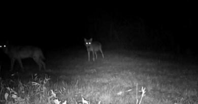 lupi bonifica renana