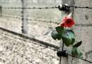 Dal Giorno della memoria alla paura dello straniero. La conoscenza storica può creare gli anticorpi contro l'indifferenza.