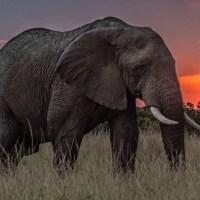 Ma van az elefántok világnapja