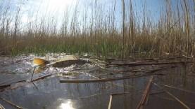 A szőke tó – A Tisza-tó hat évszaka