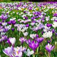 Frédéric Chopin: Tavaszi keringő