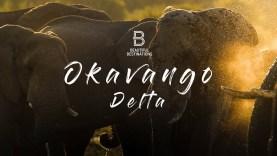 Elefántok pusztulnak Botswanában