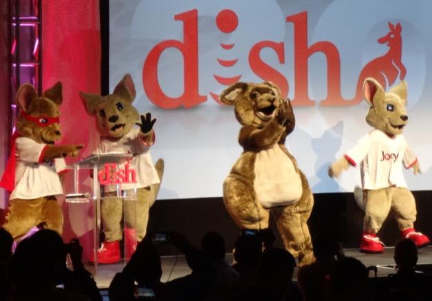 Dish kangaroos ces 5jan2015