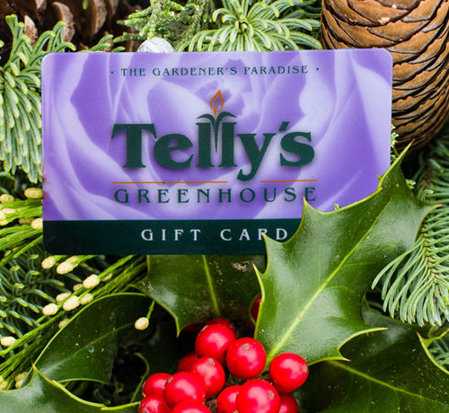 tellys greenhouse holiday giftcards