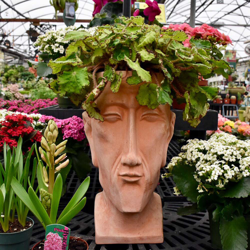 terra cotta head pot