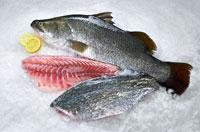 pandukappa  fish