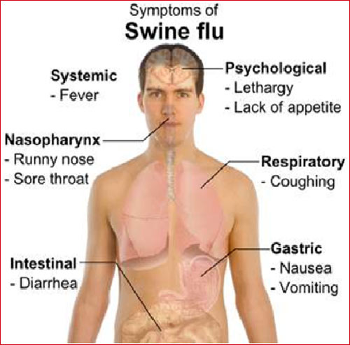 Swine Flu Spreading Across Country