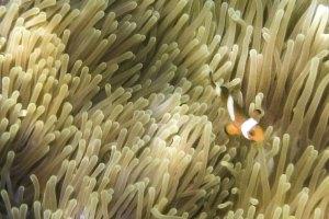 รีวิว One Day Trip เที่ยวเกาะพม่า ทริปดำน้ำเกาะบรูเออร์ Bruer Island ดำน้ำดูปะการัง เกาะดอกไม้ เกาะย่านเชือก เดินทางจากระนอง กับ Seastar
