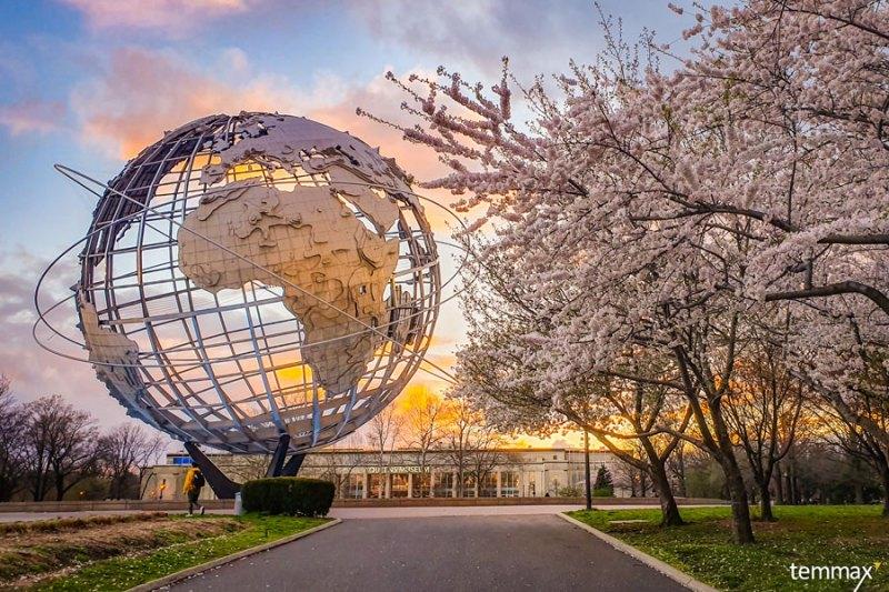 เที่ยวนิวยอร์ก New York - Corona-Park-Cherry-Blossom New York ซากุระ