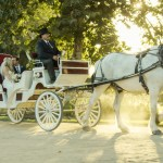 Wedding Carriage Horse Carriage Carriage Rides Temecula Ca