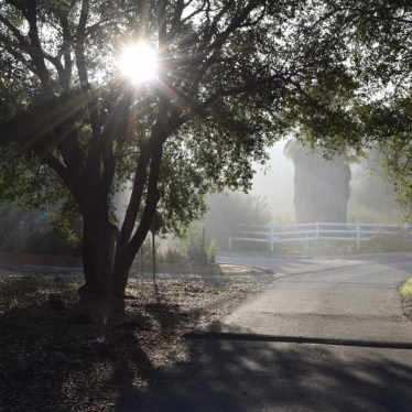 How to Protect Trees During Times of Drought