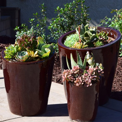 how to grow a succulent container garden