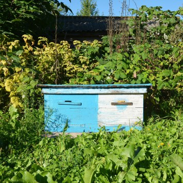 Close up on Wooden Ukrainian Blue Beehive with Garden Background. Natural Beekeeping in Your Backyard. Dadant bee hives.