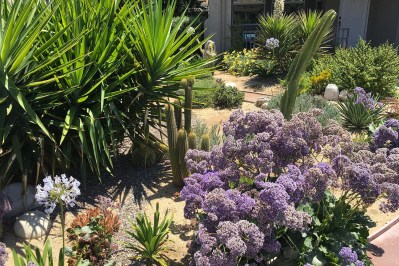 Arid garden 3