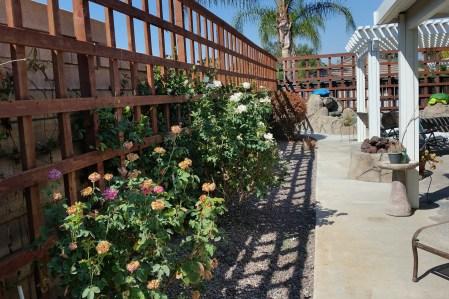 Other garden 4