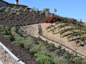 Wine country hillside plantings