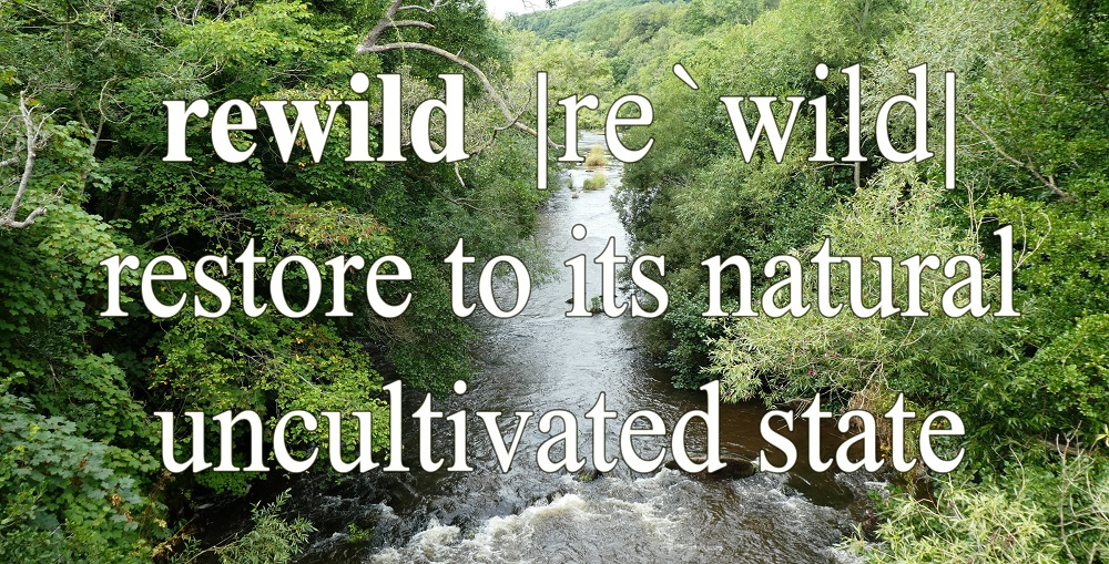 A Guide to Rewilding in the UK