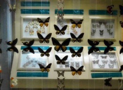 insect museum in Jakarta