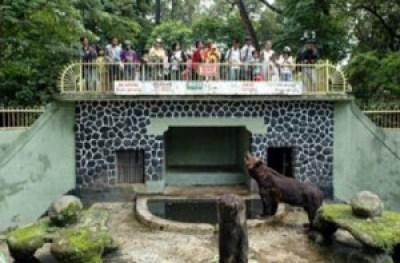 Kandang beruang di Kebun binatang Bandung
