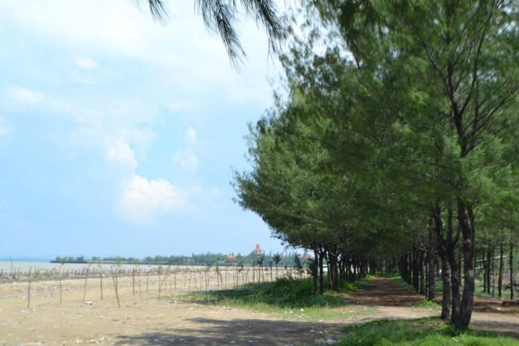 Wisata Alam di Tuban yang Eksotis - Pantai Cemara dan Mangrove
