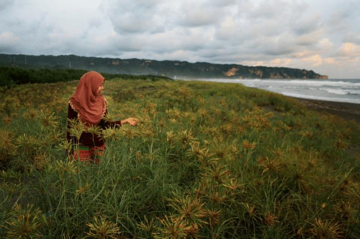 Tarif Masuk ke Pantai Cemara Sewu
