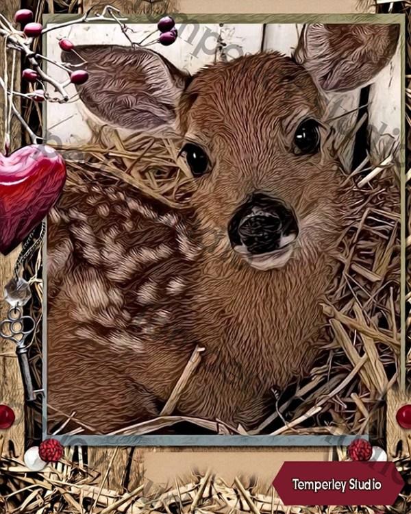 Baby deer card