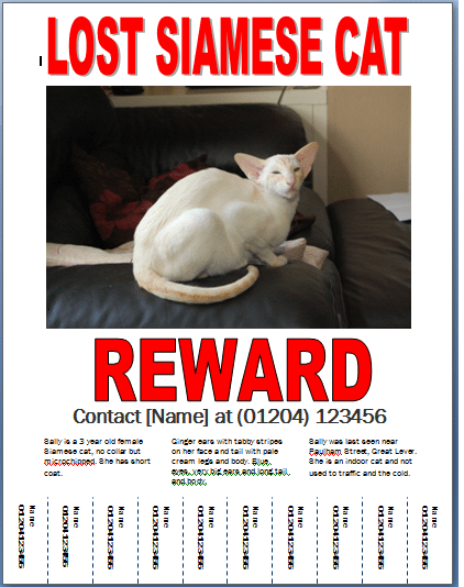 21  free missing cat poster template