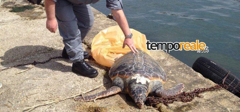 tartaruga foceverde