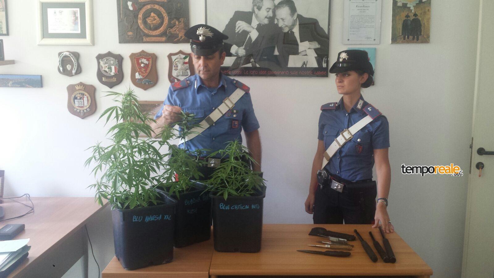 marijuana terricina sequestro