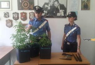 marijuana terricina sequestro