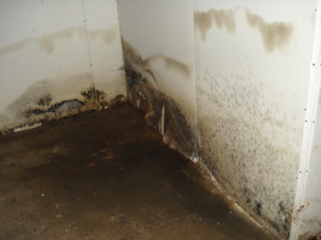 Image Result For How To Get Rid Of Mold In The Ba T