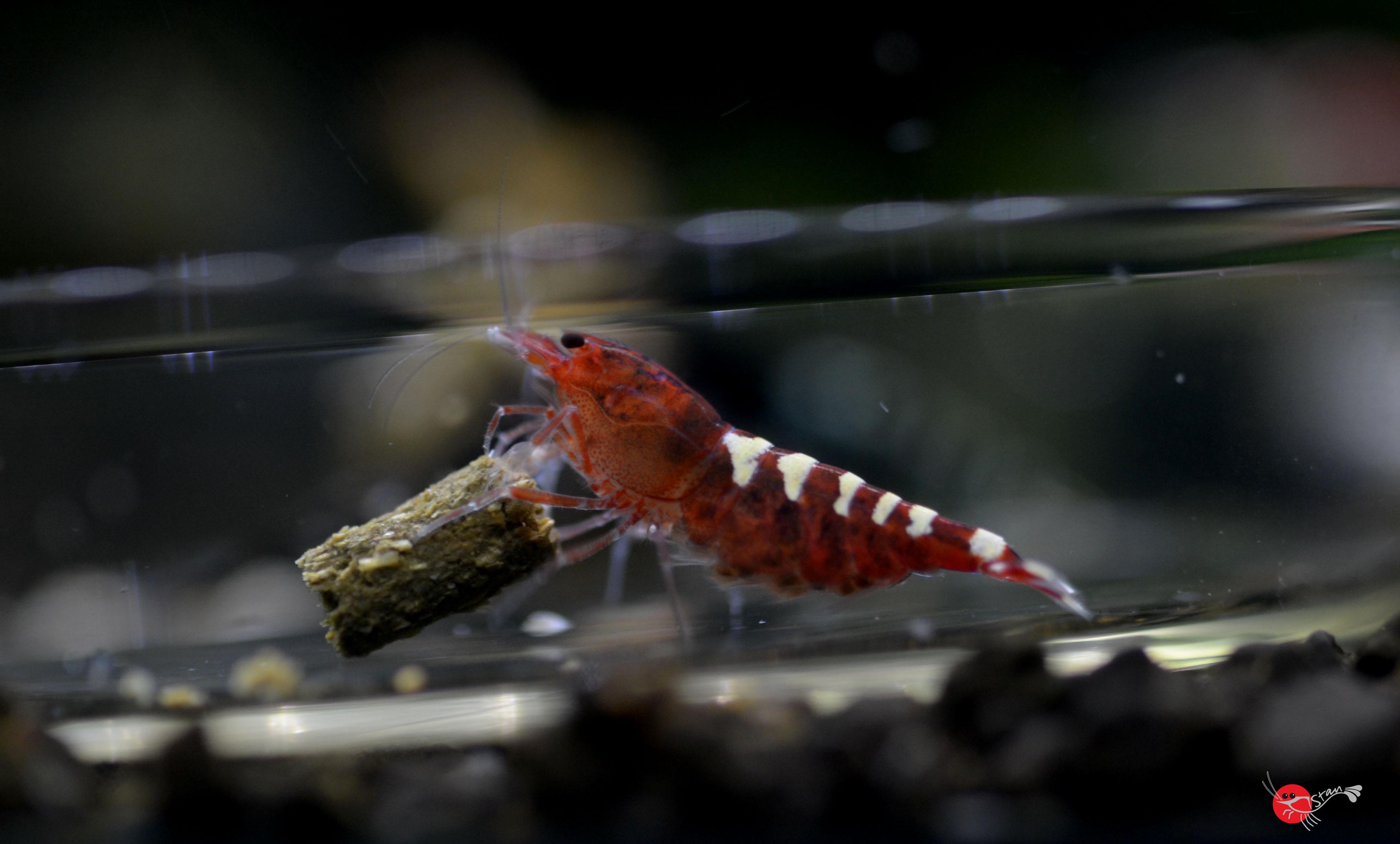 Les sols techniques et leurs principes – Tendance Crevette
