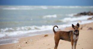 Hund im Urlaub auf Teneriffa
