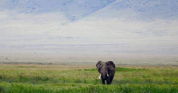 On Safari in Tanzania with Kids