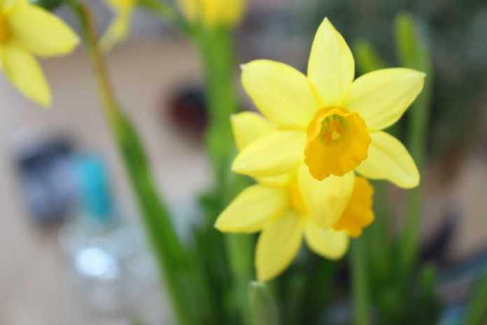 pavasaris2015